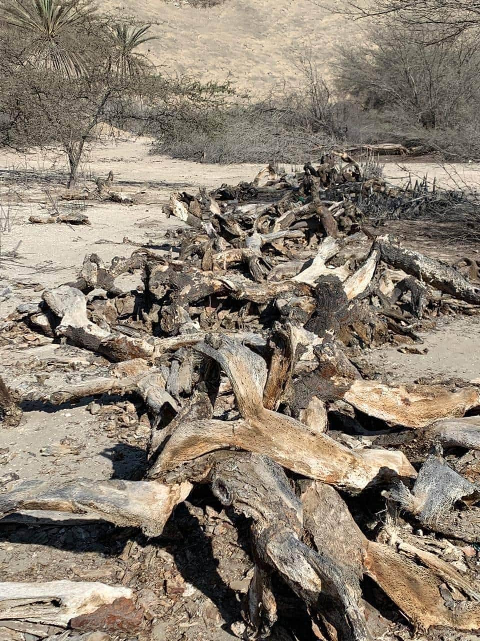 Desastre Ecológico en Orovilca